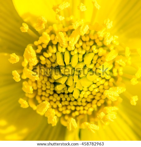 Macro of a yellow marsh marigold flower blossom