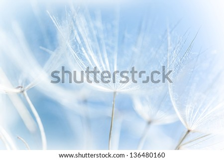 Macro of abstract dandelion background, nature detail, spring season, blooming flowers, soft focus - stock photo