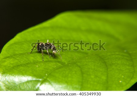 Macro of ant eating a small spider - stock photo