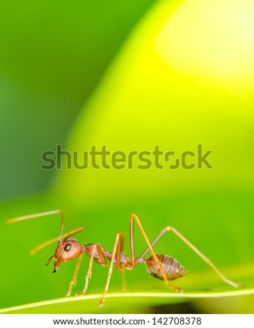 Macro of ant on green leaf - stock photo