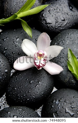Macro of beautiful orchid and green palm leaf on wet pebble - stock photo