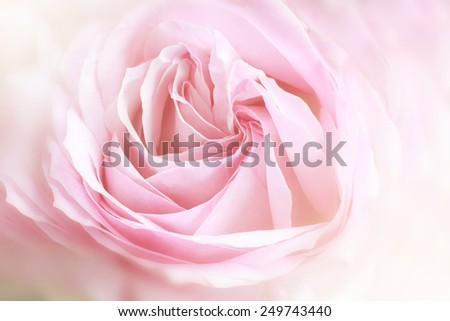 macro of beautiful rose made with color filters. - stock photo