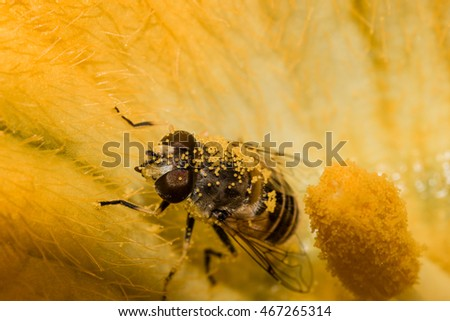 macro of Bee covered in pollen