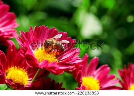 macro of bee on flower - stock photo