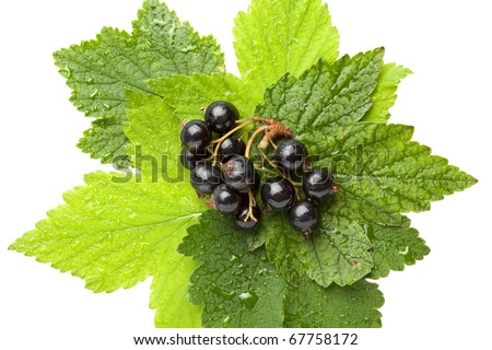 Macro of black currant bunch and leaves isolated on white - stock photo