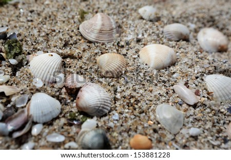 Macro of Black sea shells on sand background , Bulgaria