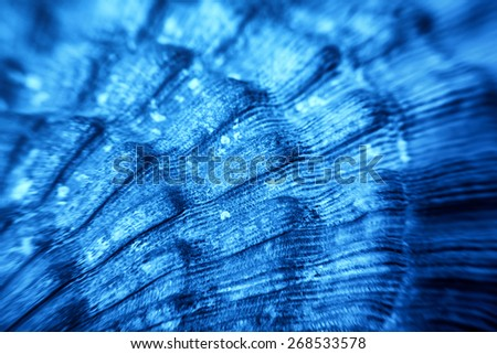 Macro of blue Sea shell texture - stock photo
