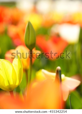 Macro of bright flowers - stock photo