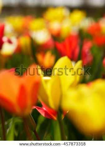 Macro of bright flowers