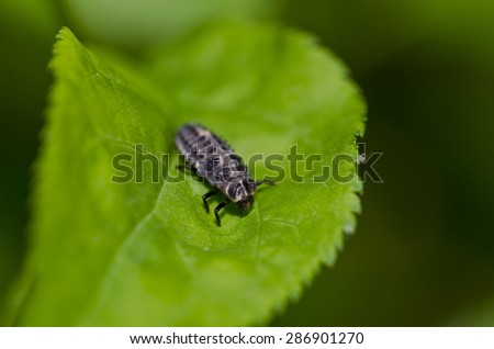 Macro of bug on green leaf