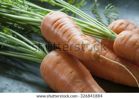Macro of carrots with tops freshly harvested from the garden in natural light. - stock photo