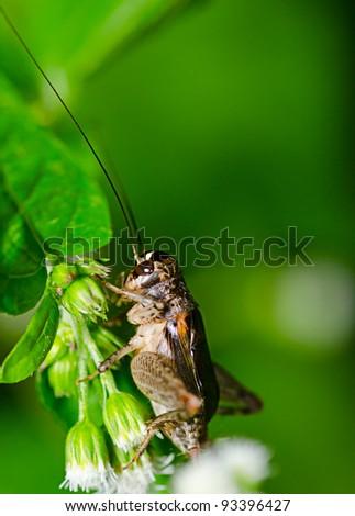 Macro of cricket at night - stock photo