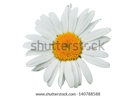 Macro of daisy flower isolated on white background