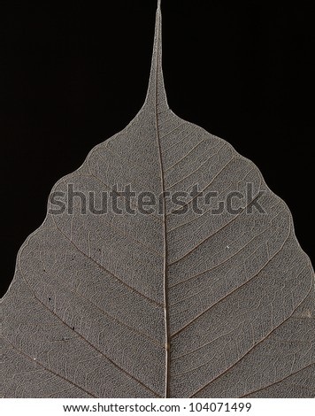 Macro of Dry Leaf Pattern
