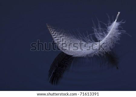 Macro of feather on water blue ripple pattern - stock photo