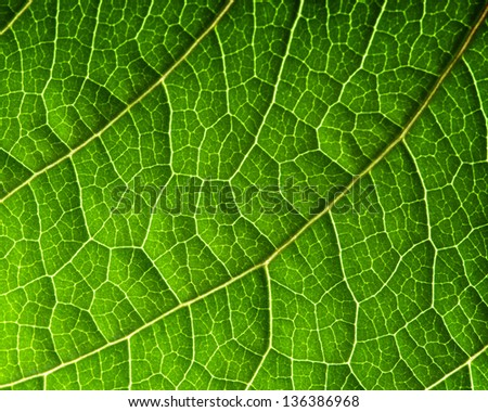 Macro of fresh green leaf as background - stock photo