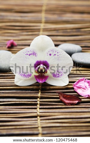 Macro of gorgeous white orchid and pebbles on bamboo mat - stock photo