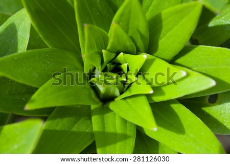 macro of green plant leaf top view for natural background, wallpaper or backdrop use