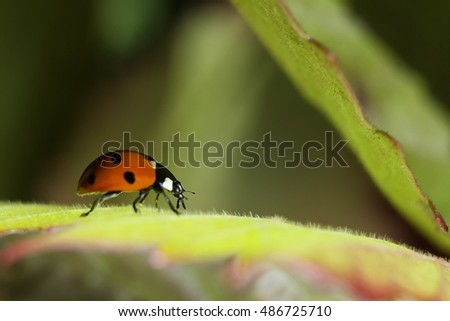 Macro of ladybug on leaf