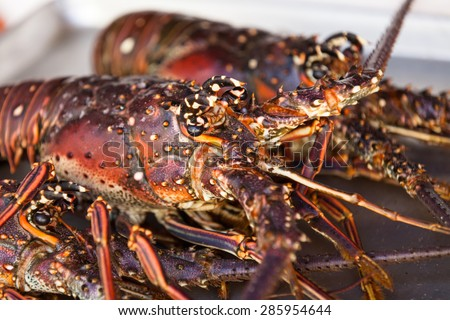 Macro of lobster heads. Two lobsters on the dish.