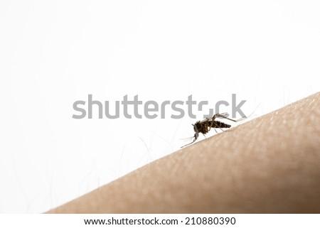 Macro of mosquito  on people skin - stock photo