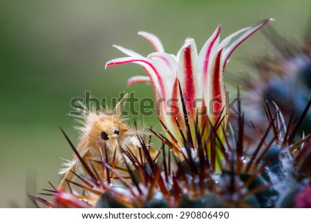 Macro of moth and cactus flower - stock photo