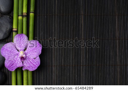 Macro of orchid and bamboo grove on black background - stock photo