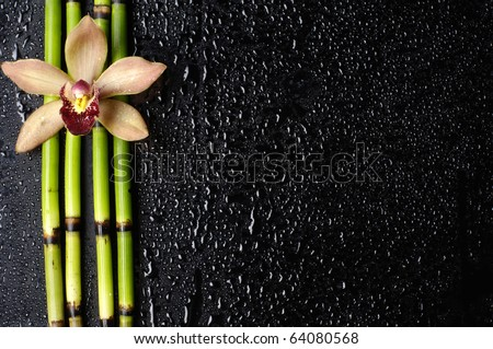 Macro of orchid and bamboo grove on wet black background - stock photo