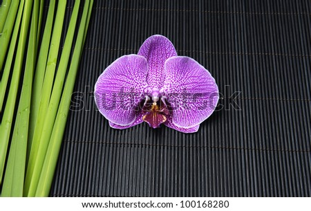 Macro of orchid and green plant on mat
