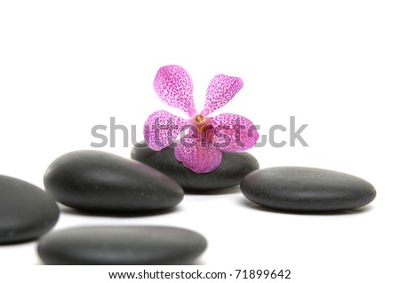 macro of orchid and on black stones