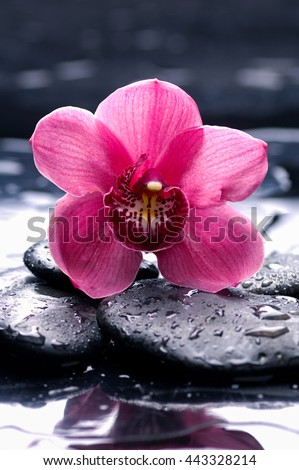 Macro of pink orchid on wet black stones  - stock photo