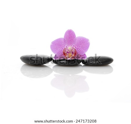 Macro of pink orchid on zen stones - stock photo