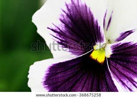 Macro of purple and white pansy. Selective focus on center of flower with extreme shallow depth of field.   - stock photo