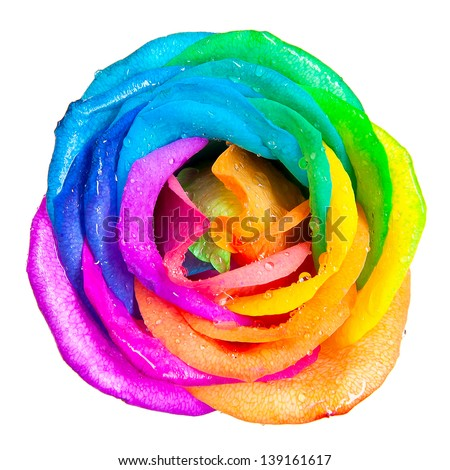 rainbow rose stock images royalty free images vectors