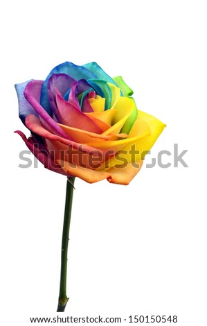 Macro of rainbow rose heart flower and multi colored petals, isolated by clipping path - stock photo