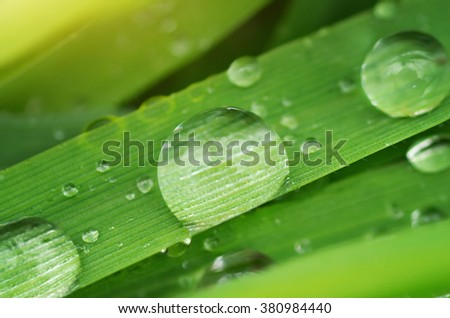 Macro of raindrop. Composition of nature. - stock photo