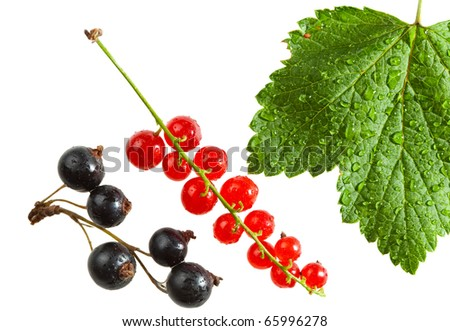 Macro of red currant and black currant bunches - stock photo
