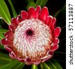 Macro of red protea centre from the top with interesting pattern - stock photo