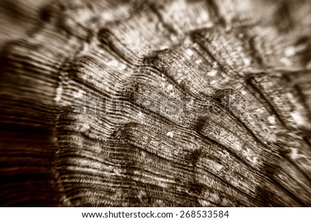 Macro of Sea shell texture - stock photo