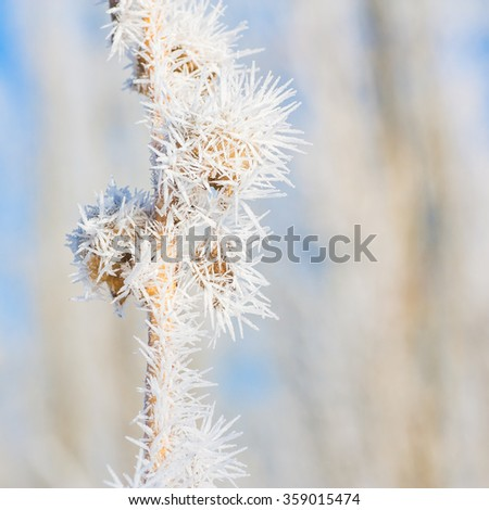 Macro of seed pods covered in hoar frost. - stock photo