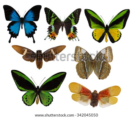 macro of seven butterflies isolated on white background