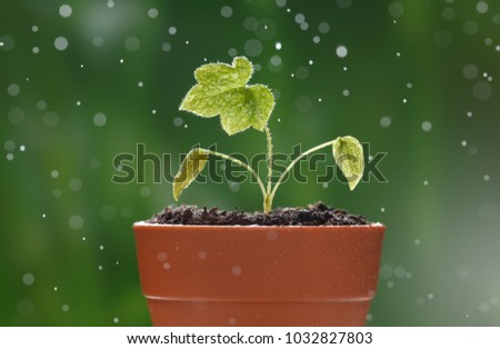Macro of small sprout of Delphinium with first leaves growing in little red flowerpot over green background under the rain drops