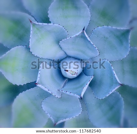 Macro of succulent plant in the desert - stock photo