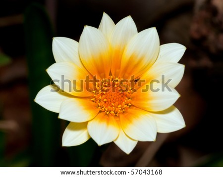 Macro of white and orange flower with bug in nature