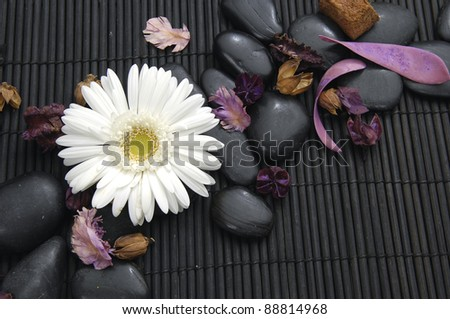 Macro of white gerbera flower with flower dried petals and zen stone - stock photo