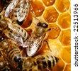 Macro of working bee on honeycells. - stock photo