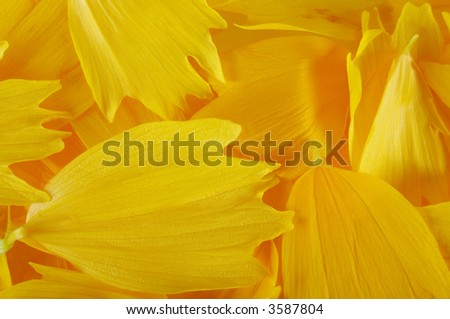 Macro of yellow petals as natural abstract background.