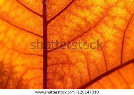 Macro on Autumn Foliage - stock photo