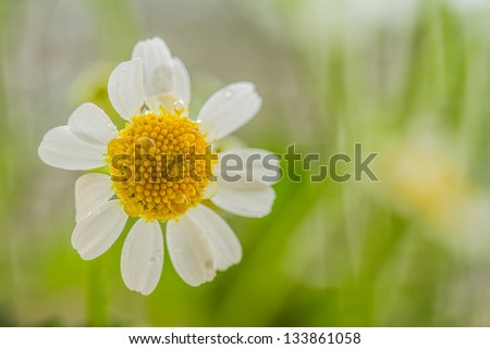 Macro photo of a Spring flower in a grass field. - stock photo
