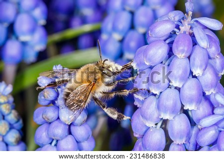 Macro photo of bee collect the nectar from the flower - stock photo